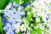 Spring wild flowers — Stock Photo