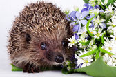 Hedgehog with wild flowers — Stock Photo