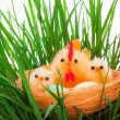 Nest with easter chickens in a grass — Stock Photo