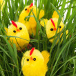 Group of easter chickens in a grass - Stock Photo