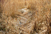 Dry grass as a natural background — Stock Photo