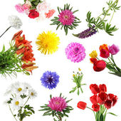 Collections of summer flowers isolated — Stock Photo