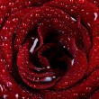 Beautiful rose background with water drops — Stock Photo