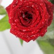 Beautiful rose background with water drops — Stock Photo #9538055