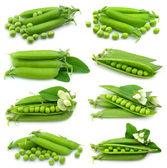 Collectie van verse groene erwt — Stockfoto