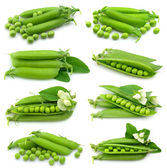Collection of fresh green pea — Stock Photo