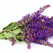 Fragrant lavender — Stock Photo #10559714