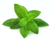 Mint leaf — Stock Photo