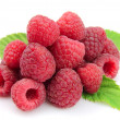 Raspberry fruits - Stock Photo
