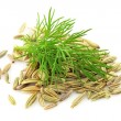 Seeds and a fennel branch — Stock Photo #8437242