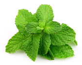 Mint leaf close up — Stock Photo