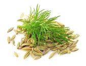 Seeds and a fennel branch — Stock Photo