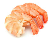 Shrimps — Foto Stock
