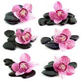 Stenen met orchideebloem — Stockfoto