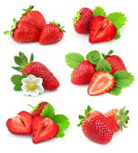 Collection of strawberry — Stock Photo
