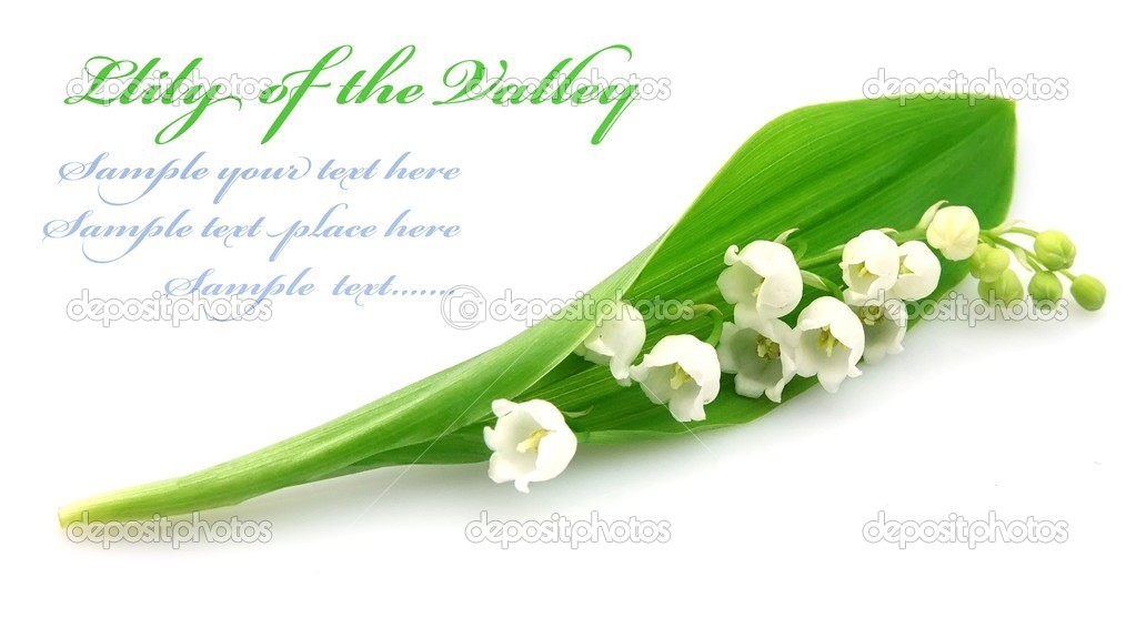 Lily of the valley close up — Stock Photo #8992482