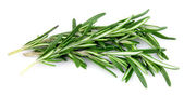 Twig of rosemary — Photo