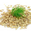 Seeds and a fennel branch — Stock Photo #9259673