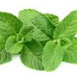 Sweet mint closeup — Stock Photo