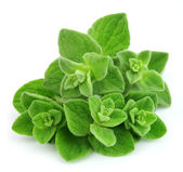 Oregano closeup — Stock Photo