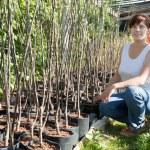 Female gardener with trees seedlings — Stock Photo #10519976