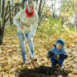 Family planting tree   in autumn — ストック写真
