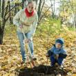 Ağaç dikimi sonbaharda aile — Stok fotoğraf