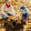 Woman with  son planting  tree in autumn — Lizenzfreies Foto