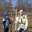 Woman and boy  planting  tree - Stock Photo