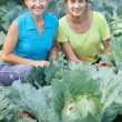 Women in plant of cabbage — Stock Photo