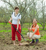 Happy women planting fruit tree — ストック写真