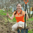 Stock Photo: Happy mature woman planting tree