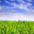 Simply green meadow — Stockfoto #10530532