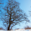 Tree in winter day — Stock Photo