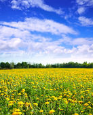 Summer landscape with dandelions — Stock Photo