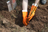 Farmer planting shrubbery — Stockfoto