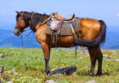 Saddled horse — Stockfoto