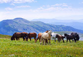 Landscape with herd of horses — Foto de Stock