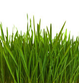 Grass over white — Stock Photo