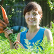 Woman is picking carrot — Stock Photo