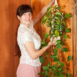 Стоковое фото: Womhanging flower pot on wall