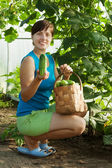 Woman picking cucumber — Stock Photo