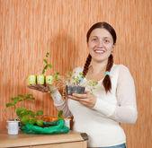 Gardener with various seedlings — Stock Photo