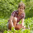 Teenager girl working in  field - Stock Photo