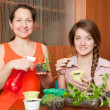Stock Photo: Two women with seedlings