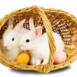 Rabbits in basket with eggs — Stock Photo