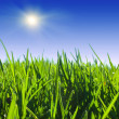 Close up of  green grass — Stock Photo