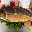 Stock Photo: Cook hands with carp fish
