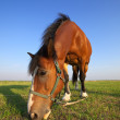Horse on summer meadow - Stock Photo