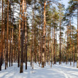 Winter lanscape with pine forest — Stock Photo #8143067